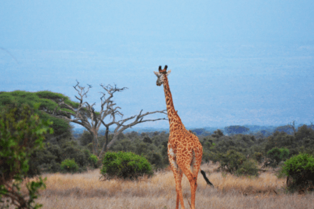 Places to Visit: Africa